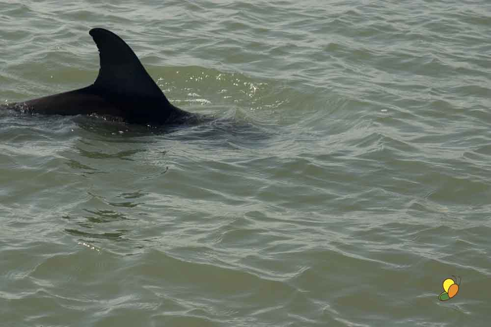 Alas, this was my best dolphin shot. I saw a lot of them, just never had the camera ready at the right time.