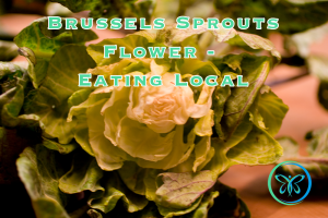Eating Local - Brussels Sprouts Flower